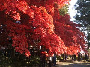 塩尻の秋イメージ